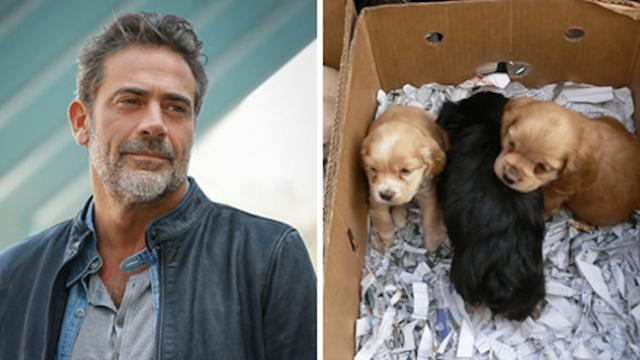 Celebrity sees kids selling a box of puppies. The question he asked them took them all by surprise