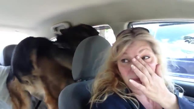 German Shepherd dog goes for a car ride: Watch his reaction when he realizes he's visiting the vet