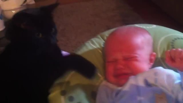 Cat soothing crying baby to sleep - too cute!