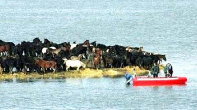 Rescuers fail to save 200 horses stranded on small land, then seven women come up with unexpected pl