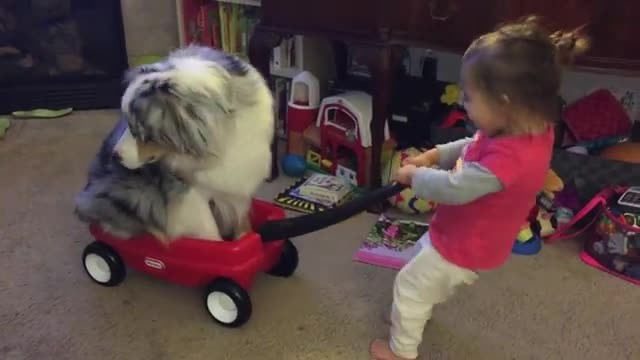 Her dog hops in the wagon. When she starts to pull – mom burst into laughter