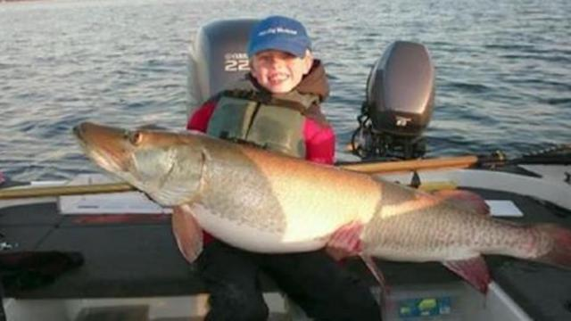 Eight-year-old lands monster 50+ pound mille lacs lake muskie