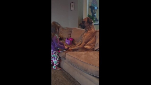 Lil girl has no one to play doctor with, then she sees dog sitting on the couch