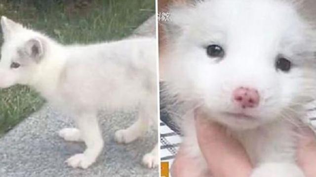 She's been raising this puppy for a year. Today she learned he's not a puppy at all