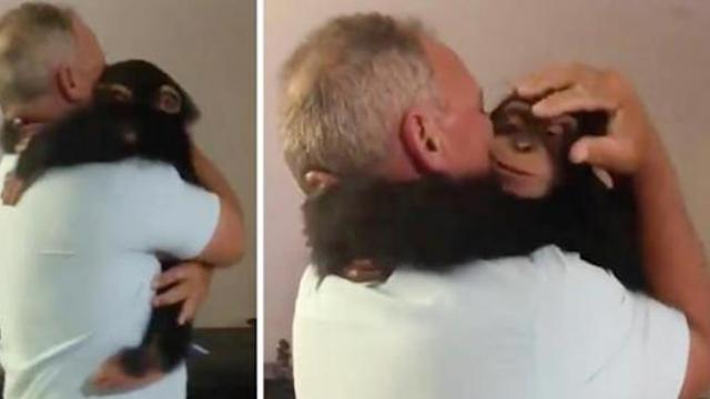 Chimp spits drink out with excitement when he spots his old caretakers
