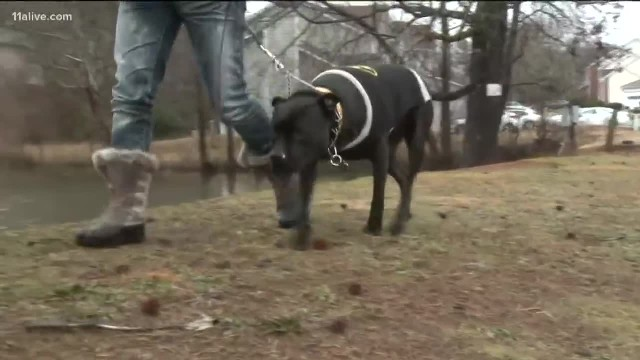 Anxious Pit Bull Wouldn't Stop Barking, Leads Owner To A Dark Figure In A Pond