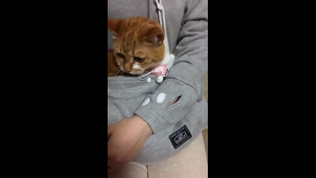 The Mewgaroo Hoodie, A Cozy Sweatshirt With a Cat Sized Pouch So Kitties Can Snuggle Inside