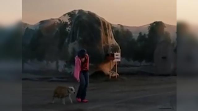 Stray dog kept running away from rescuers, so one day they decided to follow her with a camera