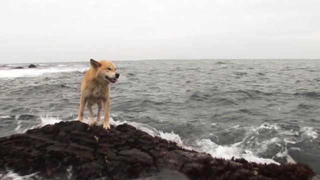 This dog has waited on a rocky shoreline for a year The reason