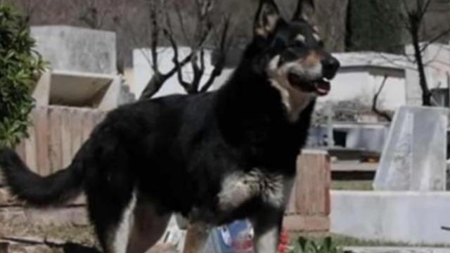 Loyal dog passes away after 11 years of protecting his master's