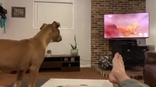 "Puppy loves watching ""The Lion King"" but is overwhelmed with emotion when Mufasa dies"