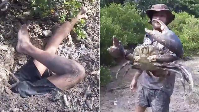Man dives into hole to capture creature and yanks out a huge crab