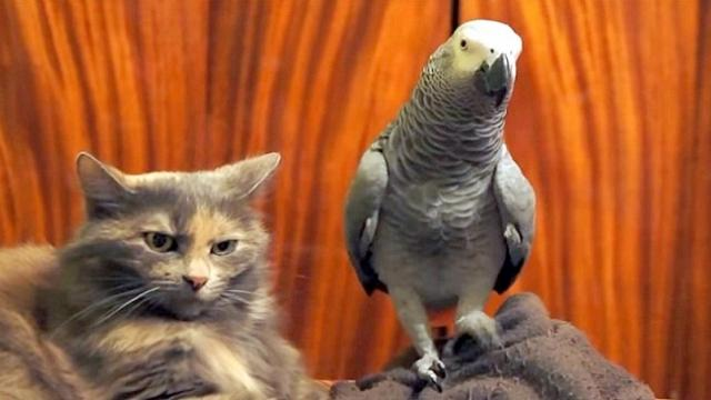 Watch how this birds efforts to cheer up a grumpy cat