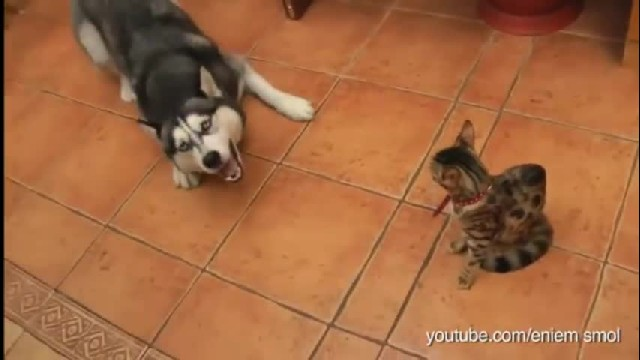 He's trying to be friends, but the cat's reaction has me cracking up