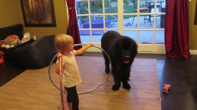 Tiny girl shows dog new hula hoop only dog's move has everyone losing it
