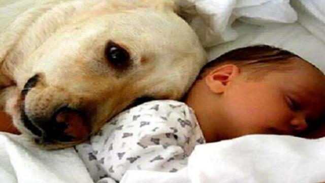 Stray dog rescues a baby abandoned in a plastic bag!