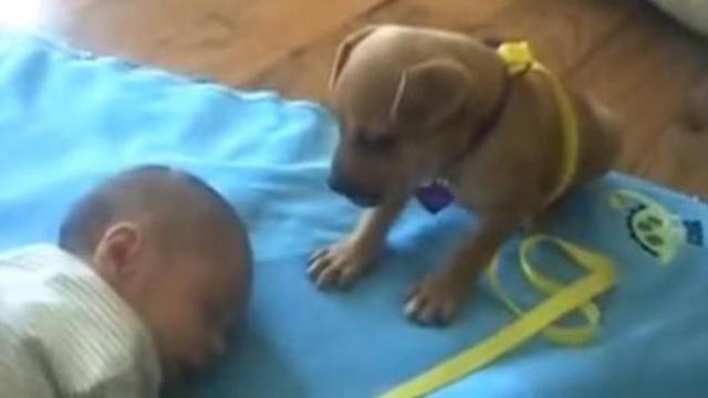 Puppy wants to protect the baby, but it's sooooo sleepy