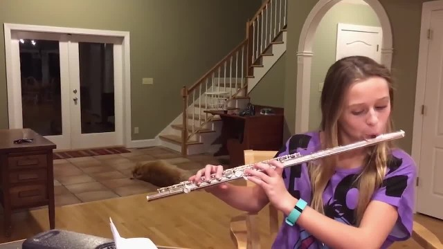 Young Girl's Trying To Practice Flute Instead Dog Has Internet Rolling
