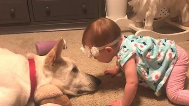 Baby girl invades dogs personal space to kiss him prompting response
