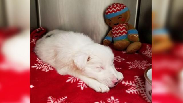 Puppy found in bag with rocks in partially frozen creek