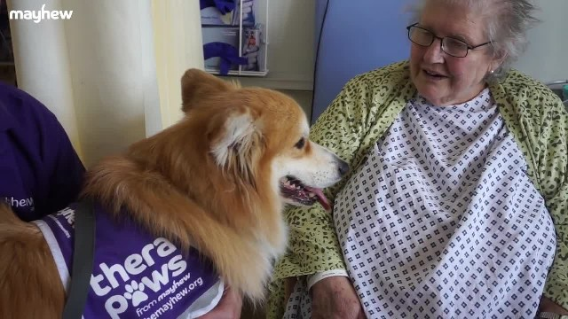 TheraPaws Supports World Alzheimer's Month - The Mayhew