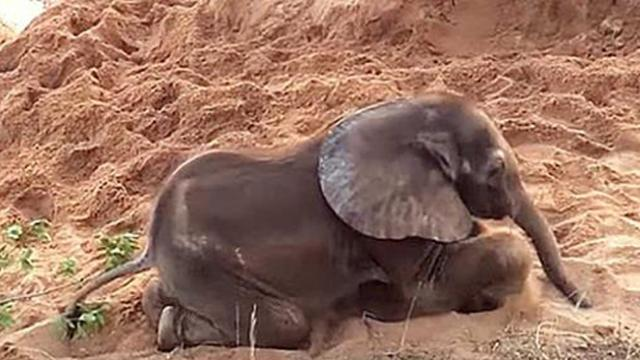 The herd rejected this baby - Who befriends her left everyone