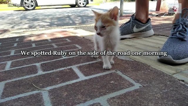 Rescue of a blind kitten found alone on the side of the road