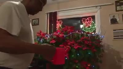 Man Grows His Late Wife's 'Miracle Poinsettia' For The Past 19 Years