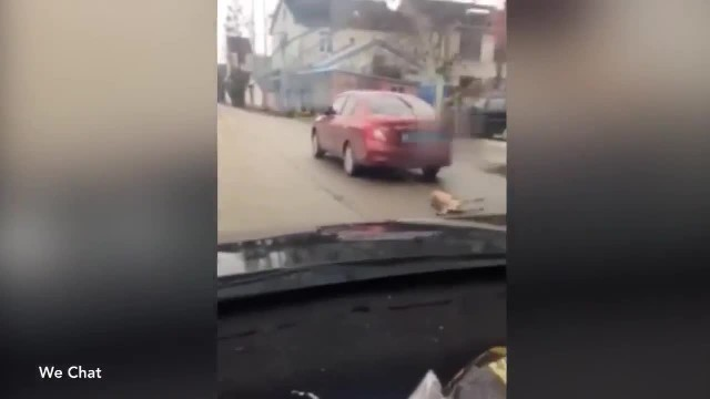 """Cruel Man Chains Dog To A Car And Drags Him To Death """