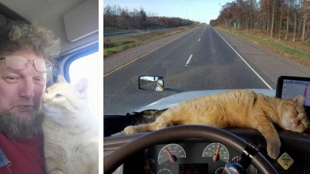 Lonely truck driver adopts neglected stray cat