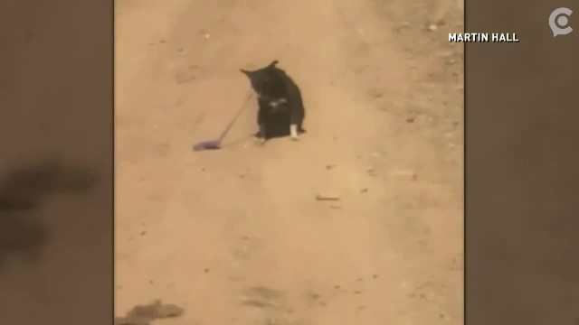 Man sees leashed dog alone on dirt road, then cries for help send him on a rescue mission
