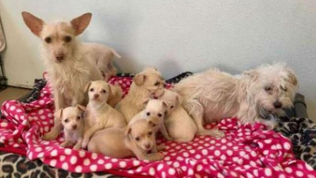 Stray mother dogs found raising their puppies together—and rescuers are amazed by their bond