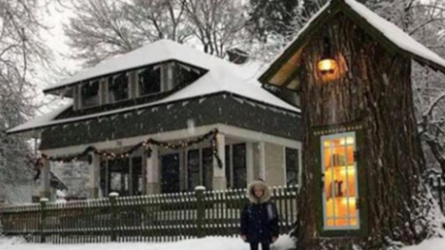 Woman transforms rotting tree in her front yard into neighborhood library