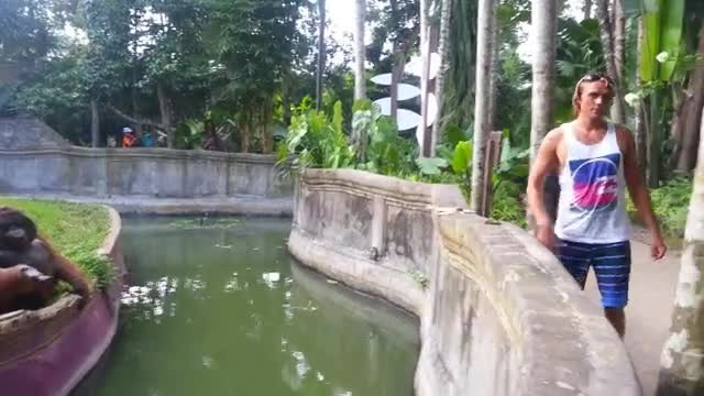 A Man Tosses A Treat At An Orangutan What Happens Next Has Everyone Laughing In Disbelief - Rumble