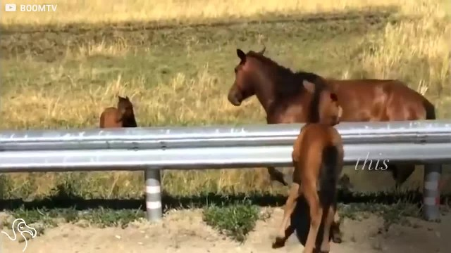 Man sees tiny foal stuck on highway and runs to save its life – now watch how mom says thank you