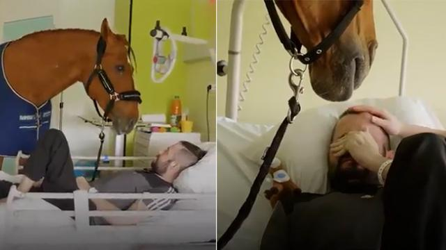 A mature stallion turns into a therapist as he goes around cheering up patients