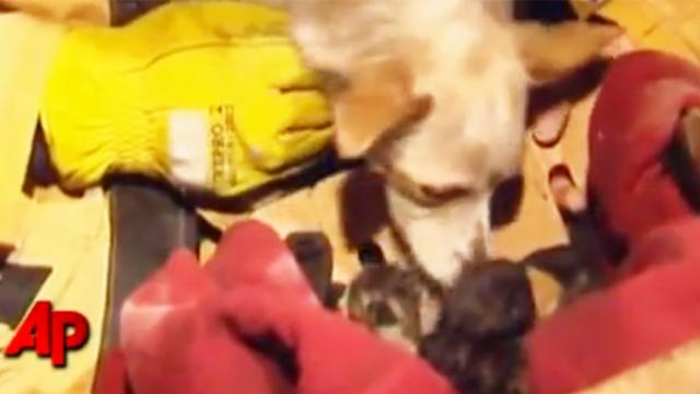 Firefighters rush into burning house but dog refuses to leave and firefighters are now calling him a