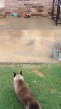 He spent the entire day making a cat door. Now watch the kitties first attempt to get through it