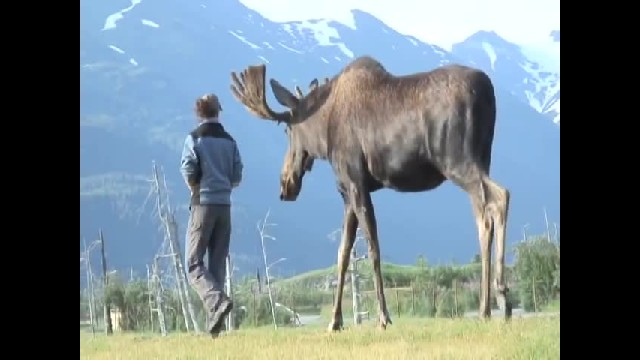 A Giant Wild Moose Walked Towards Her While She Backs Up, But No One Expected THIS