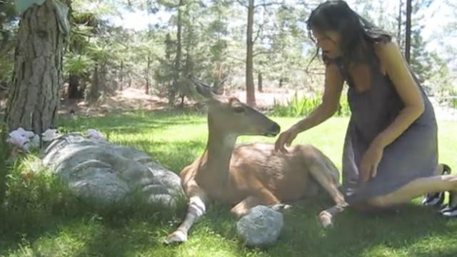"She helped an injured deer, but it was the way it said ""Thank You"" that amazed her."