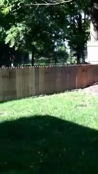 New fence for Stella