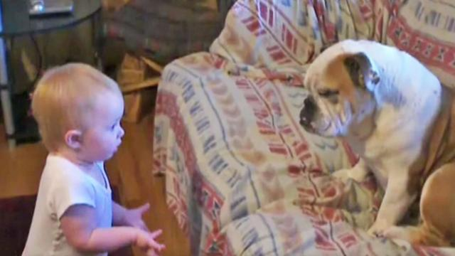 Baby has a bone to pick with bulldog & its adorable