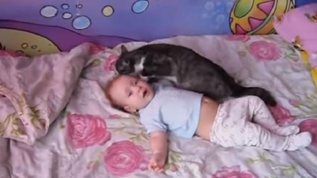 Caring cat offers snuggles and talks softly to comfort crying baby
