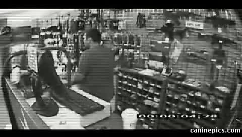 A robber lunges at cashier not knowing what's hiding behind the counter