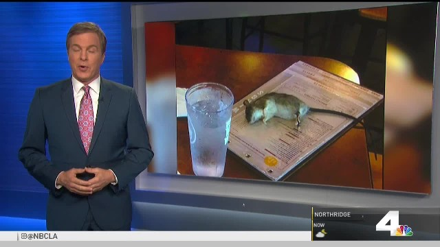 Big rat drops from ceiling onto customer's menu at Buffalo Wild Wings