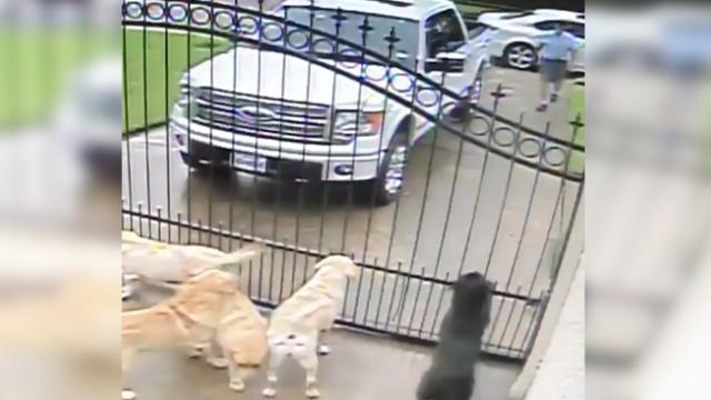 Camera records mailman approaching dogs at home - Footage shows his true colors