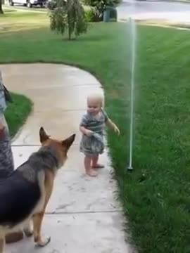 German Shepherd is terrified of new water sprinkler, until toddler shows him how to overcome his fea
