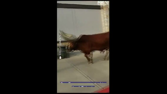 Petco Allows Leashed Pets in Stores so a Texas Man brought his GIANT Bull!