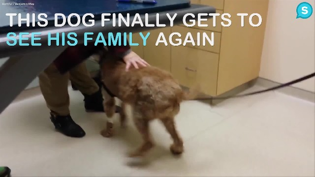 Formerly Blind Dog Sees After Surgery