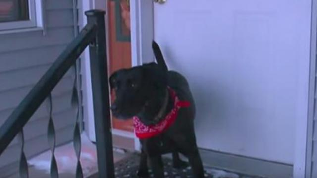 Hero dog leads owner to elderly woman's body in snow in below-freezing temps